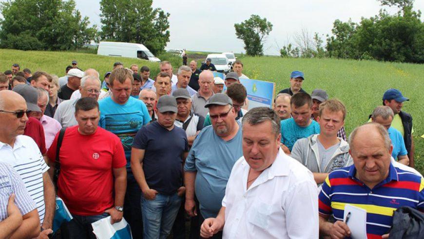 1 июня 2017 г. День поля по рапсу (Розовка, Запорожская область)