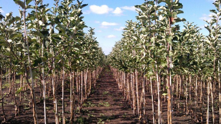 Правительство окажет финансовую поддержку садоводству и ягодоводству