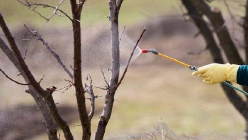 Рекомендации для садоводов от агроотдела компании «Агрохимсервис»